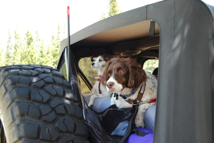 Dogs Jeep